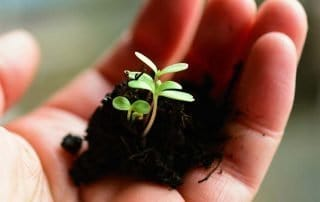 Hand with seedling
